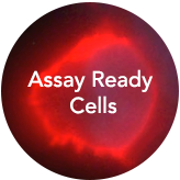 Assay Ready Cells